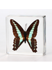 The Real Insect Co Butterfly Paperweight