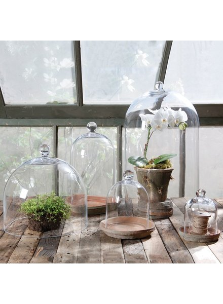 HomArt Glass Dome - Mini - Clear