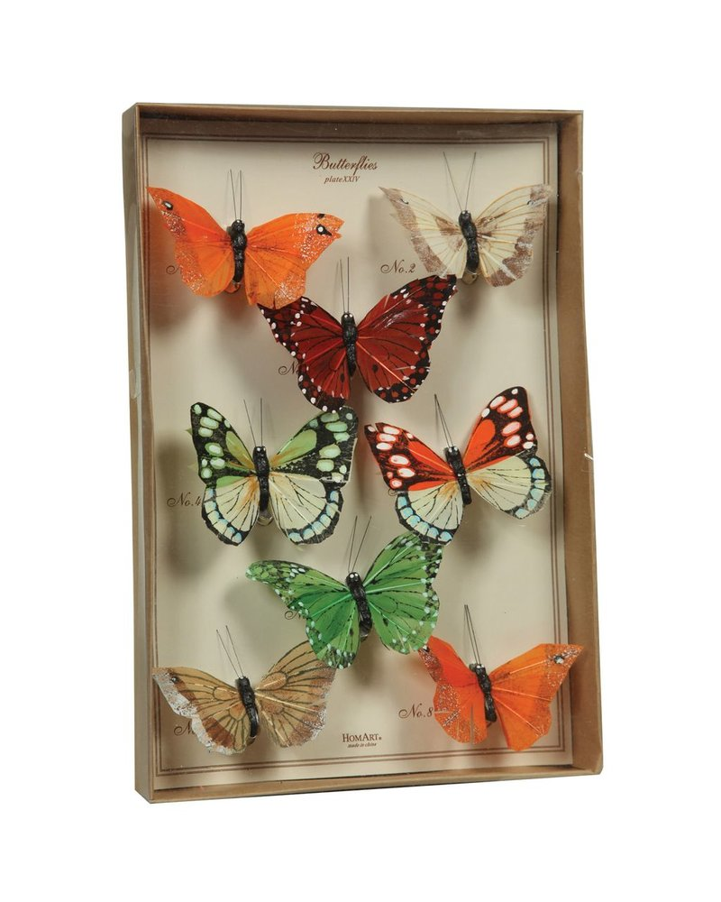 HomArt Butterfly Specimen Box - Multicolor