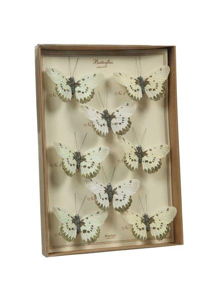 HomArt Butterfly Specimen Box - White-Brown