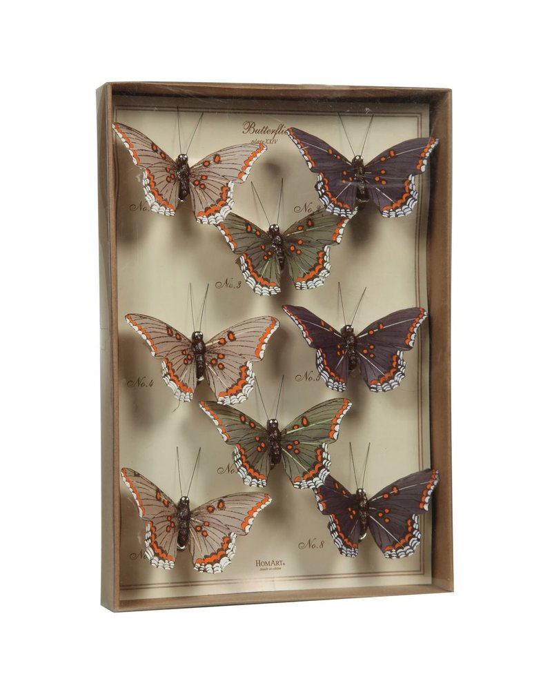 HomArt Butterfly Specimen Box - Purple-Green