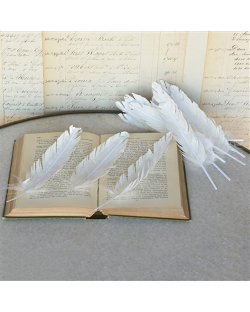 HomArt Paper Feathers in White - Box of 12