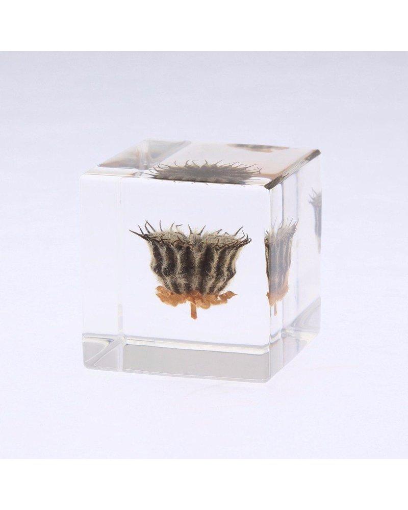 """Sola Cube Velvetleaf Acrylic Cube 1.6"""""""
