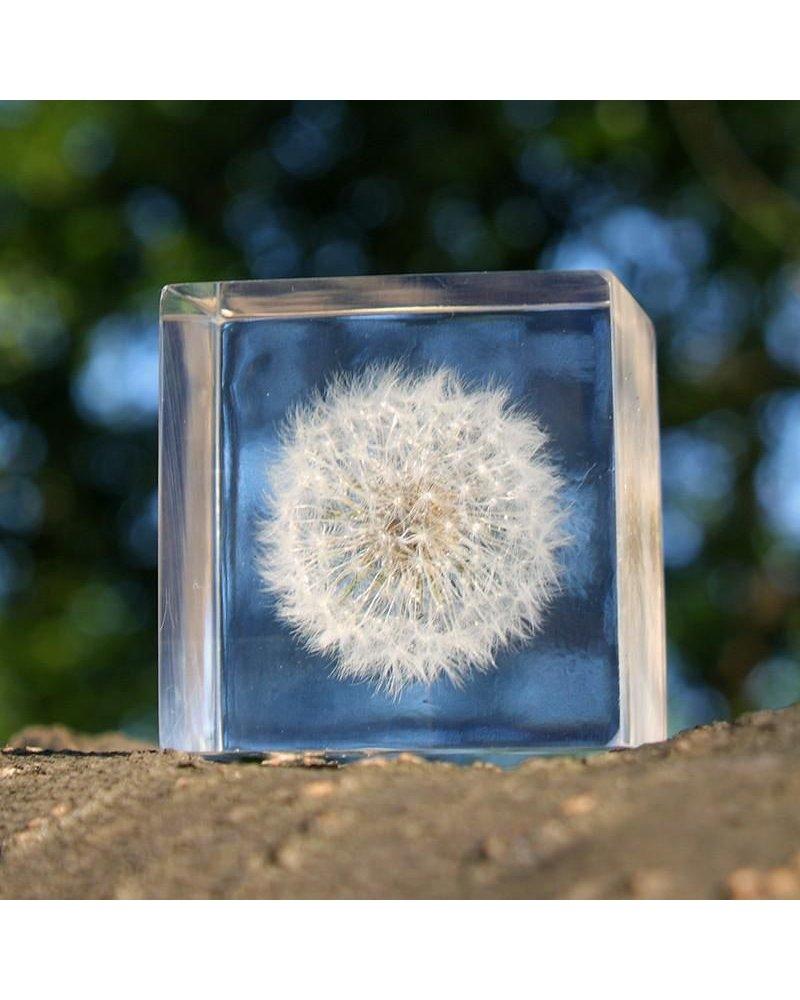 "Sola Cube Dandelion Acrylic Cube 1.6"""