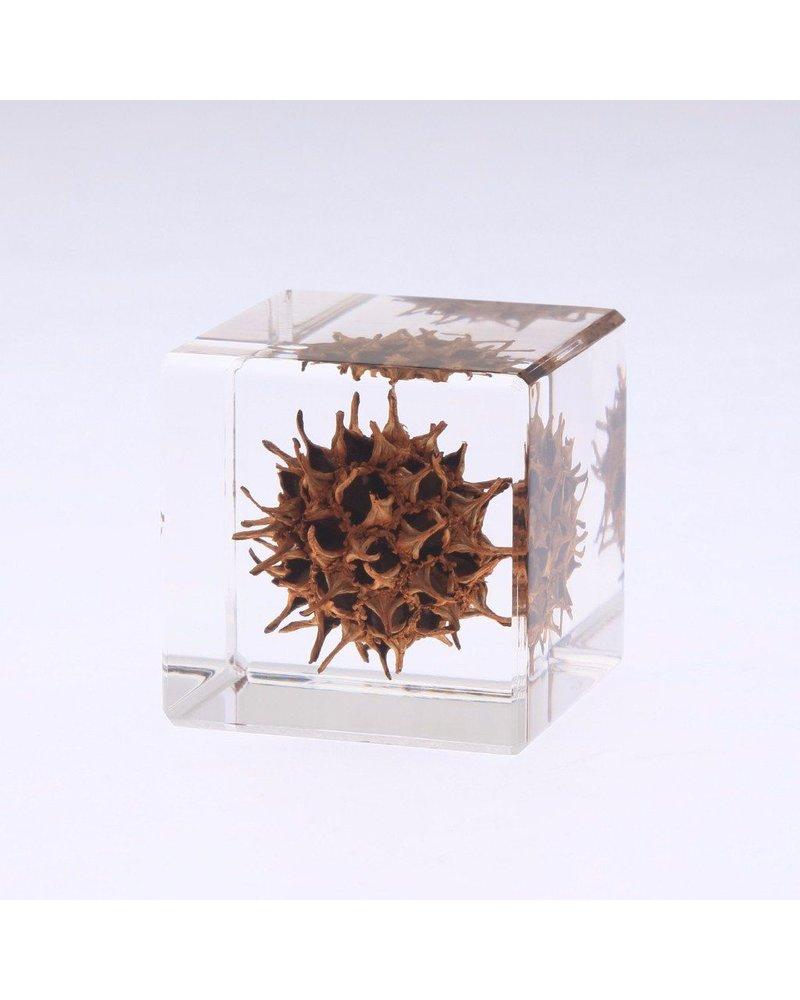 "Sola Cube American Sweetgum Acrylic Cube 1.6"""