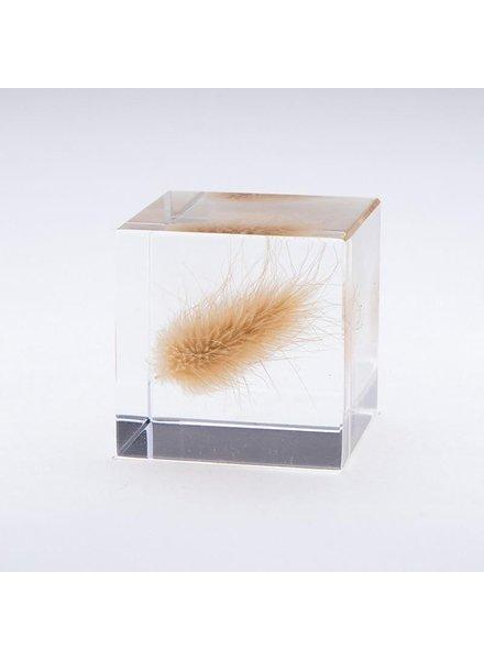 "Sola Cube Bunny Tail Grass Acrylic Cube 1.6"""