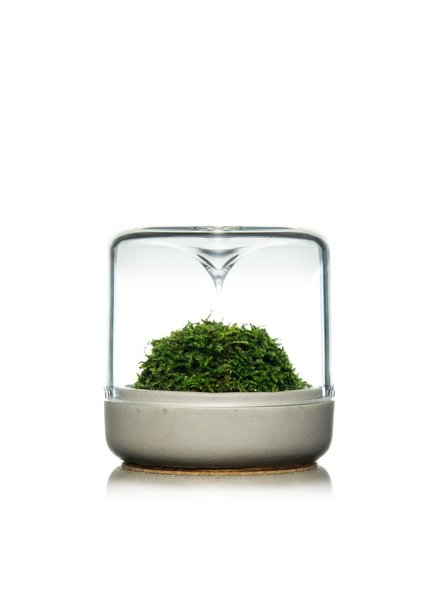 Modern Sprout Small Concrete + Moss Sanctuary Rainforest