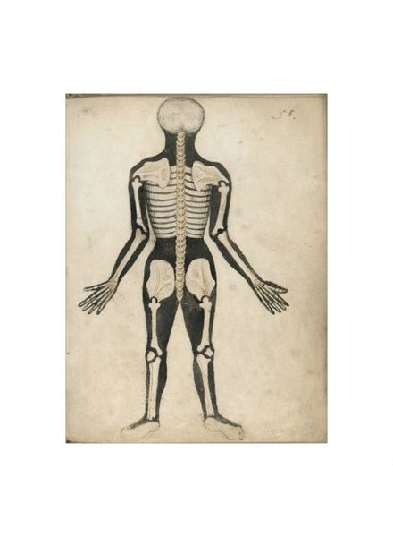 Watson & Co Anatomical Skeleton Back Patent Sign 12x16