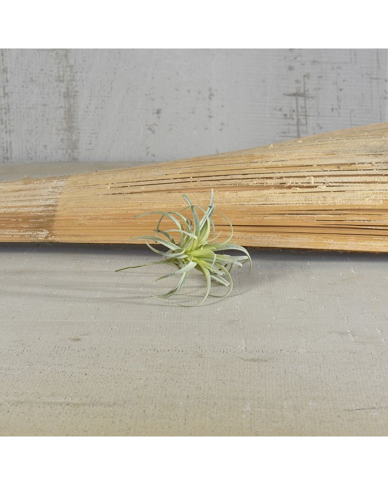 HomArt Small Faux Tillandsia - Set of 2