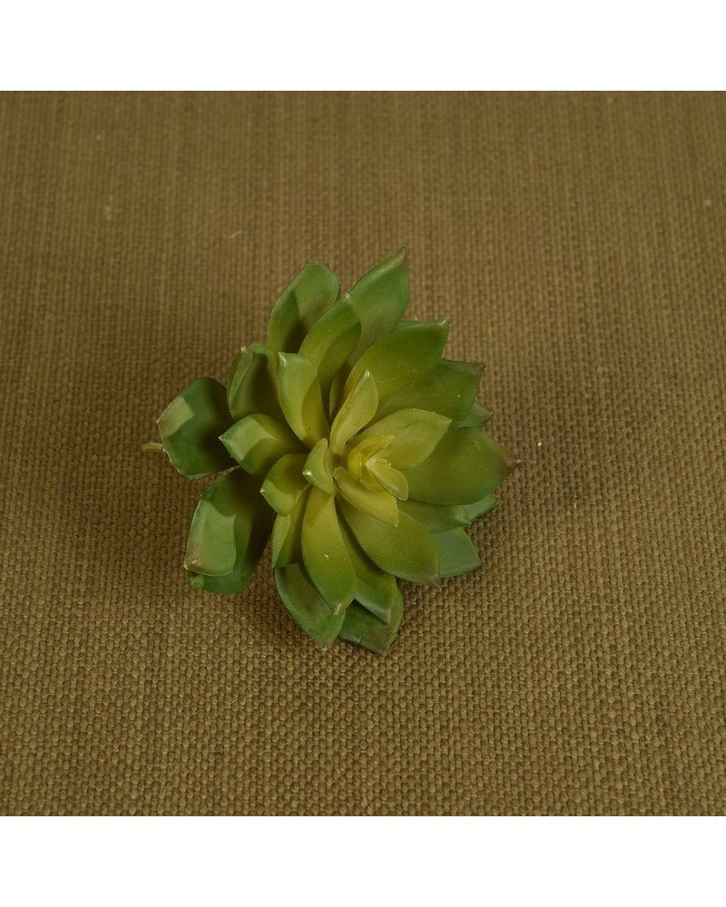 HomArt Large Green Faux Echeveria Succulent - Set of 2
