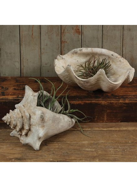 HomArt Cement Cast Clam Shell - Antique White