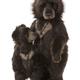 Australia Big Ron and Little Ron Charlie Bears