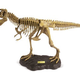 Australia Dr Steve - T. Rex Model Skeleton