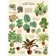 Australia Poster/Giftwrap - Houseplants