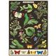 Australia Poster/Giftwrap-Caterpillars
