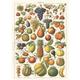Australia Giftwrap - Fruit