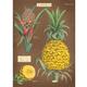 Australia Poster/Wrap - Pineapple #