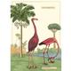Australia Poster/Wrap - Flamingo #