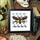 Australia Acherontia atropos skull print 16.5x16.5
