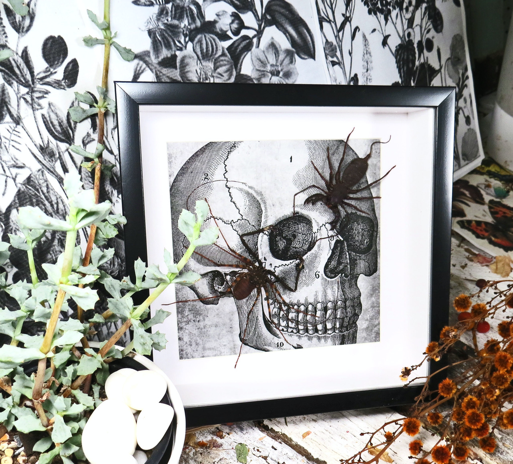 Australia cave spider and whip scorpion skull print 20x20x