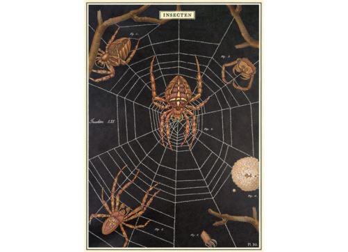 Australia Poster/Wrap Spider Chart*