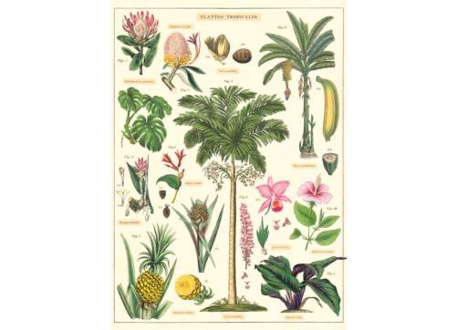Australia Poster/Wrap -Tropical Plants #