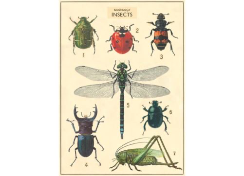 Australia Poster/Wrap - Insects