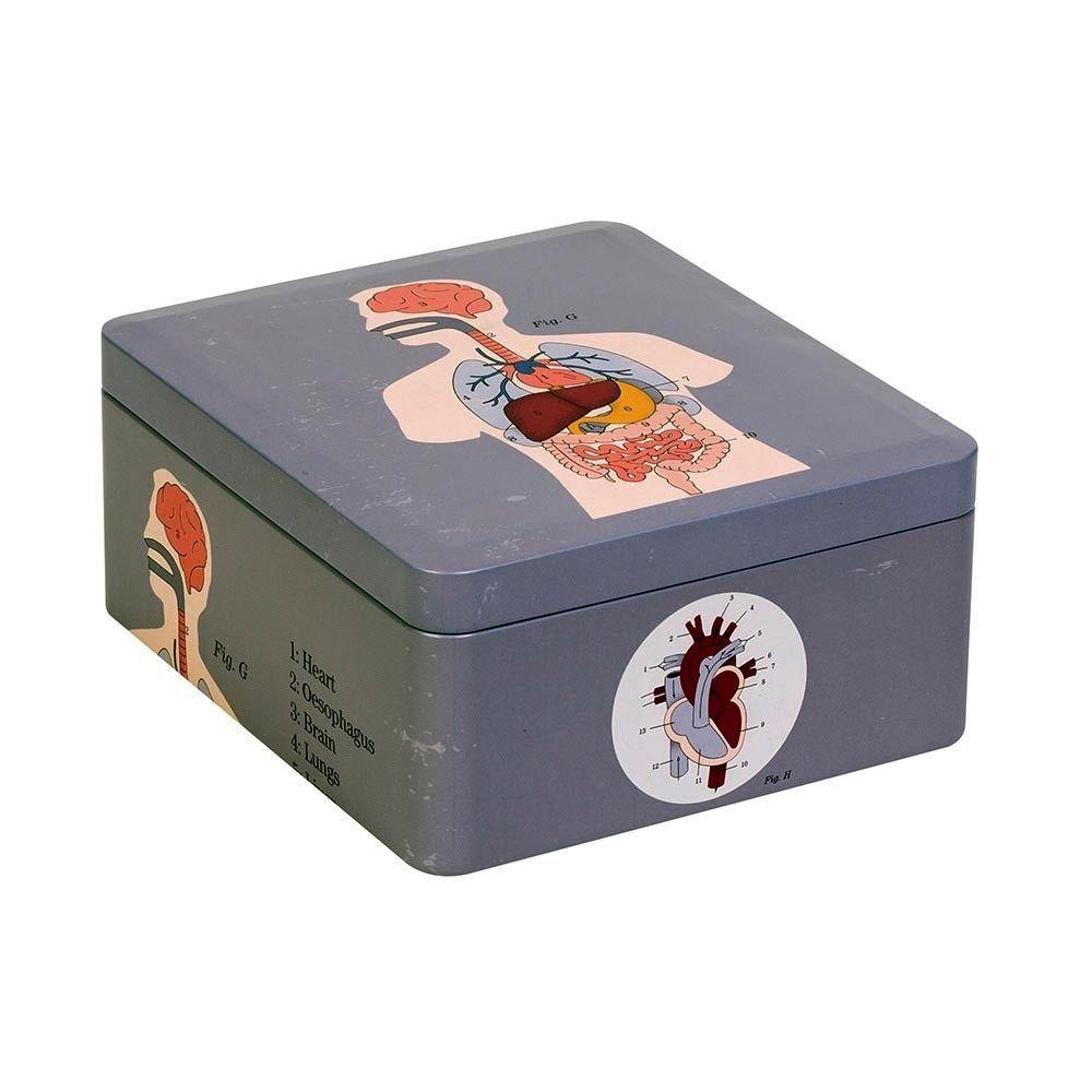 Europe Anatomical Storage Tin Organs