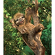 Australia Three Toed Sloth Puppet