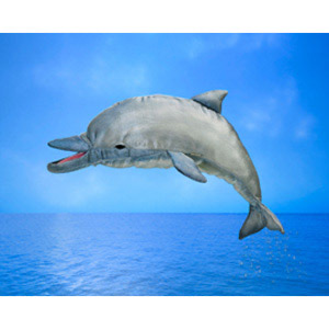 Australia Whistling Dolphin Puppet