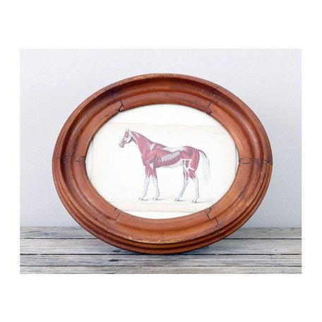 Antique Horse Engraving in Early Oval Frame