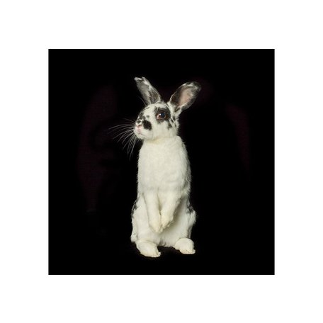 """Black and White Rabbit by Val Shaff 48""""x48"""""""