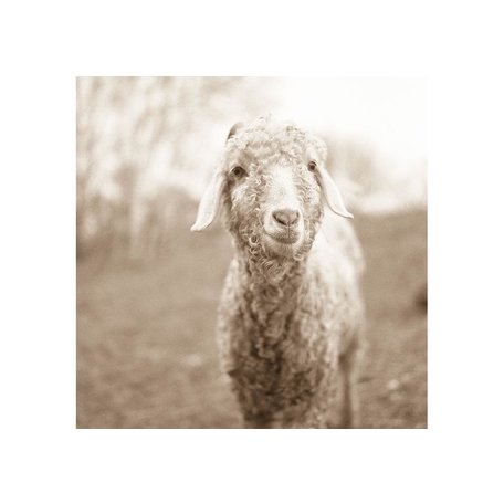 "Larissa's Sheep, Framed by Val Shaff 48""x48"""
