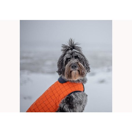 Maras Apus Dog Jacket in Orange, Size 18