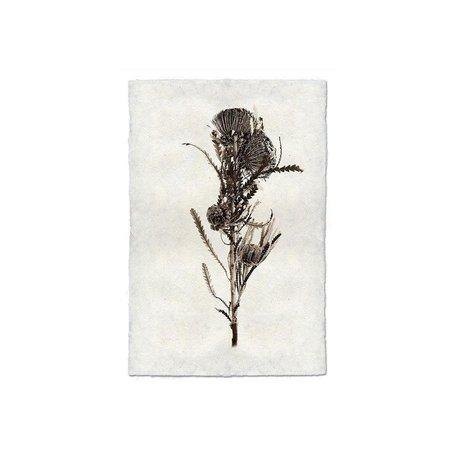 Handmade Paper Print Banksia Form