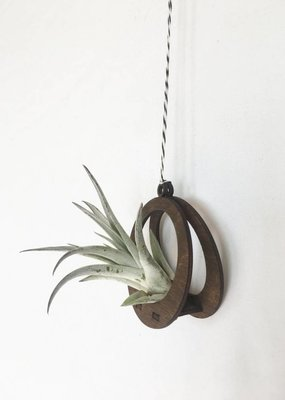 Mini Air Plant Hanger Circle Walnut