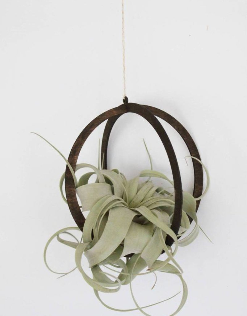 Sphere Air Plant Hanger Walnut