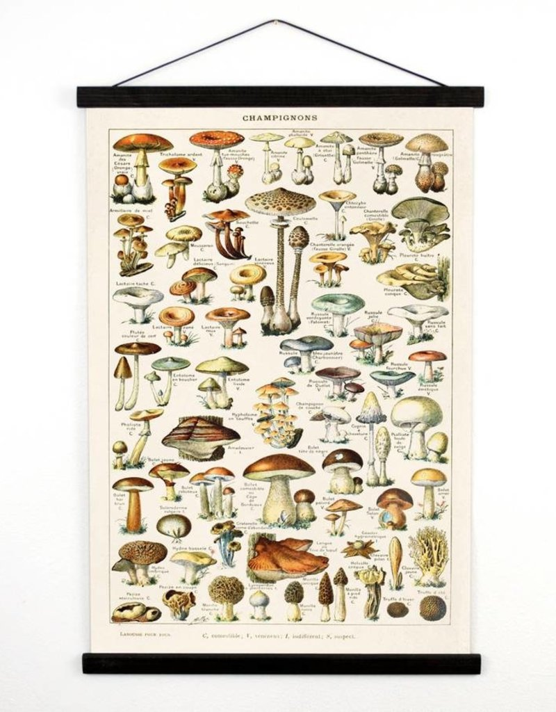 Curious Prints Vintage Botanical French Mushroom Canvas Wall Hanging -18x24