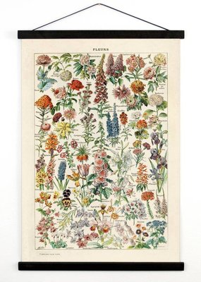 Curious Prints Vintage Botanical French Garden Flower Canvas Hanging- 18x24