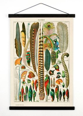 Curious Prints Vintage Natural History Bird Feather Canvas Hanging-13x17
