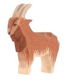 Ostheimer Goat male.