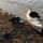 Oru Kayak Oru Carbon Paddle