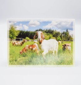 Out To Pasture Card Marley