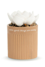 Demdaco Succulent Oil Diffuser - Smile Good Things Are Coming
