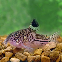 Products tagged with clean up vrew for freshwater aquariums