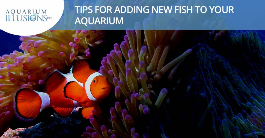 Tips For Adding New Fish To Your Aquarium