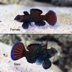 Products tagged with cool looking reef safe fish