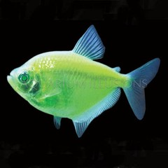Products tagged with green glofish