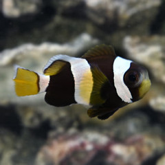 Products tagged with clown fish reef safe