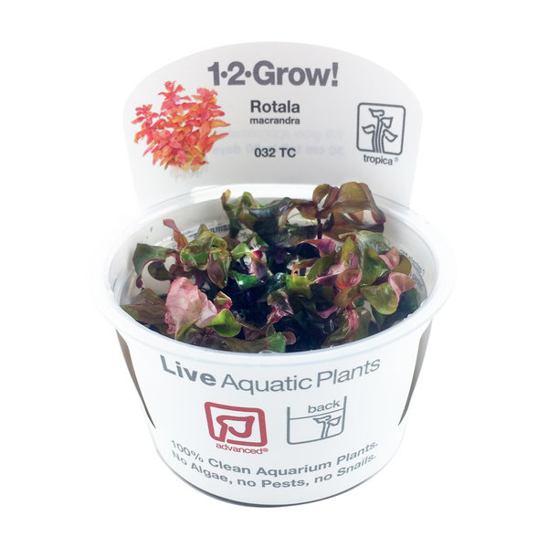 Tropica Tropica 1-2-Grow Pot